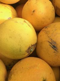 Oranges <br>InCampagna